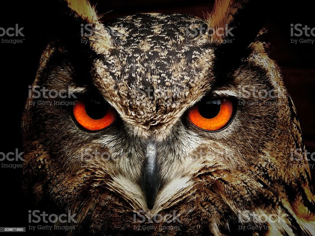 an owl stock photo