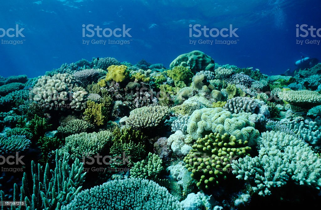 An underwater picture of a coral garden stock photo