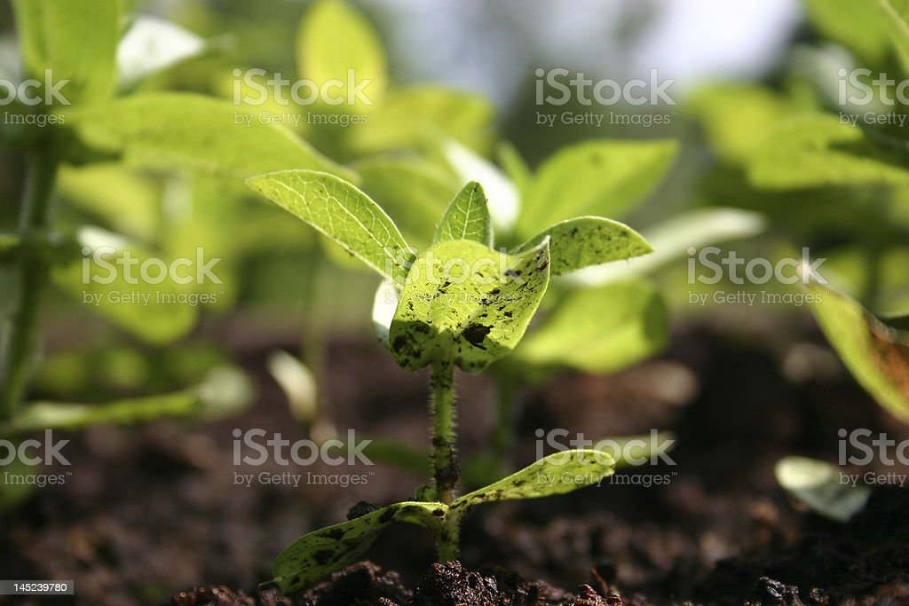 An up close photograph of a seedling stock photo