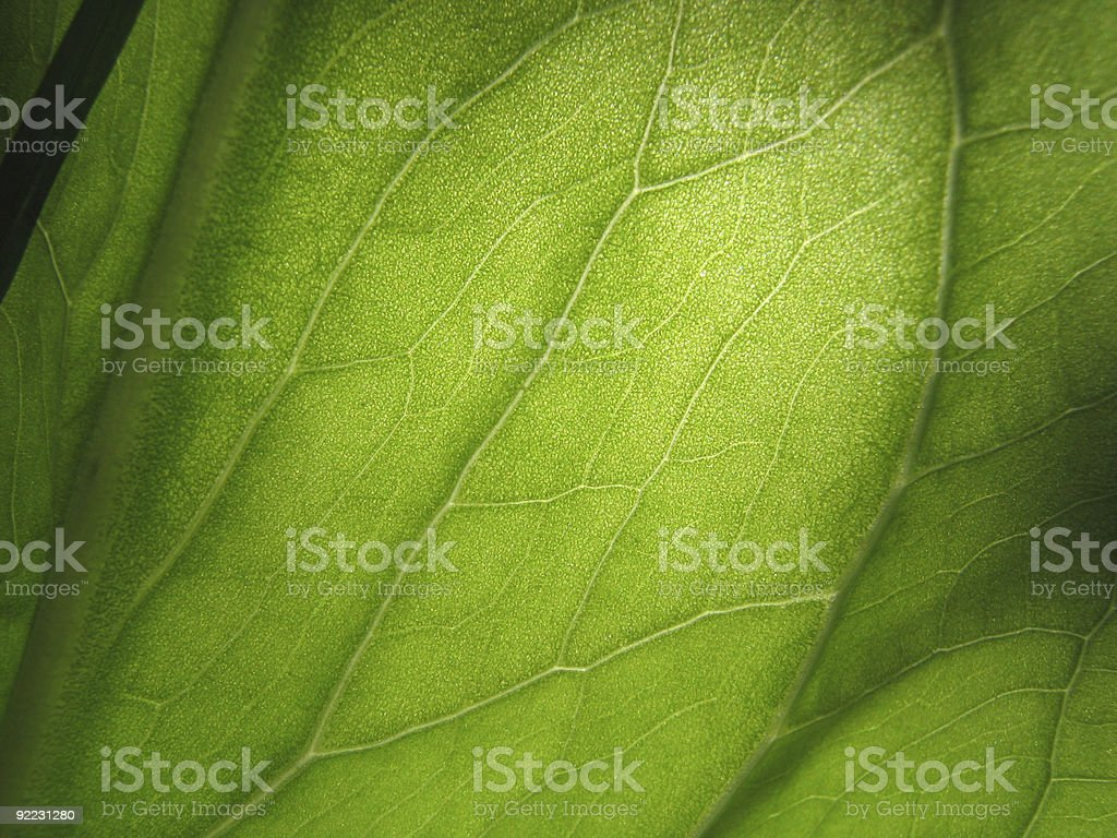 An up close picture of a green leaf royalty-free stock photo