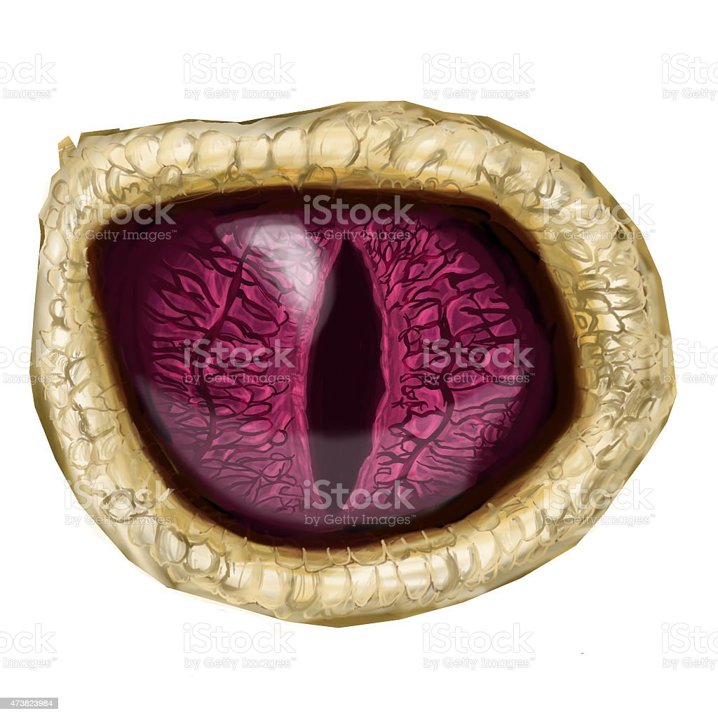 An up close picture of a reptilian eye stock photo