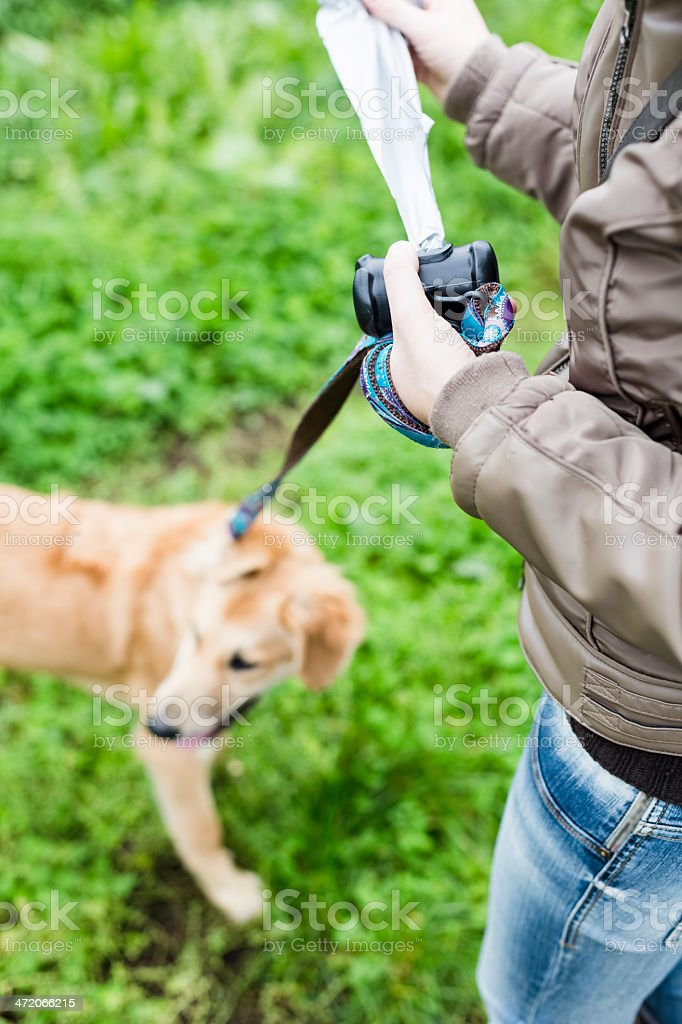 An urban dog owner is responsible for picking up pet feces stock photo