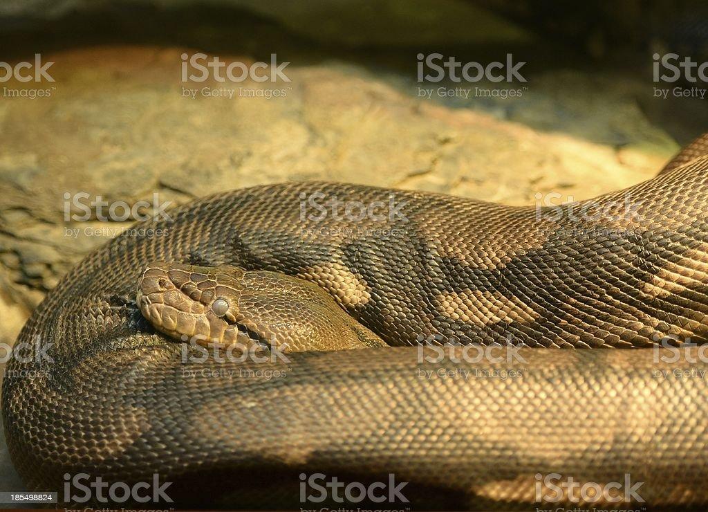 Anaconda da cidade de Nova Iorque foto de stock royalty-free