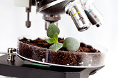 analysis of soil sample with young plant under microscope