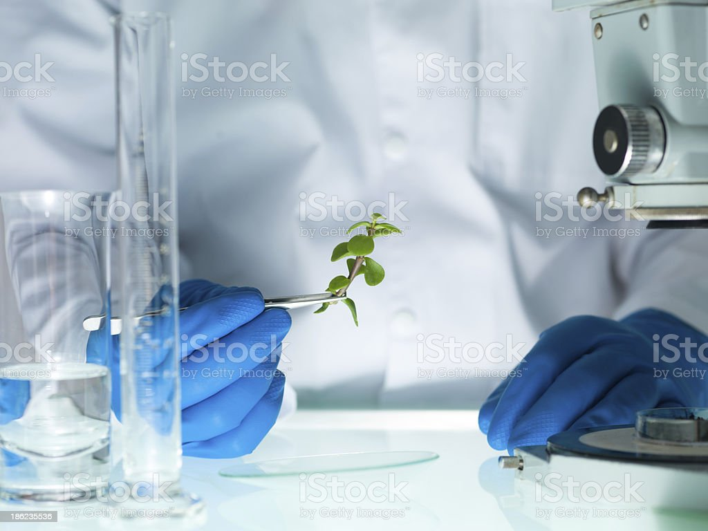 analyzing a plant in the lab stock photo