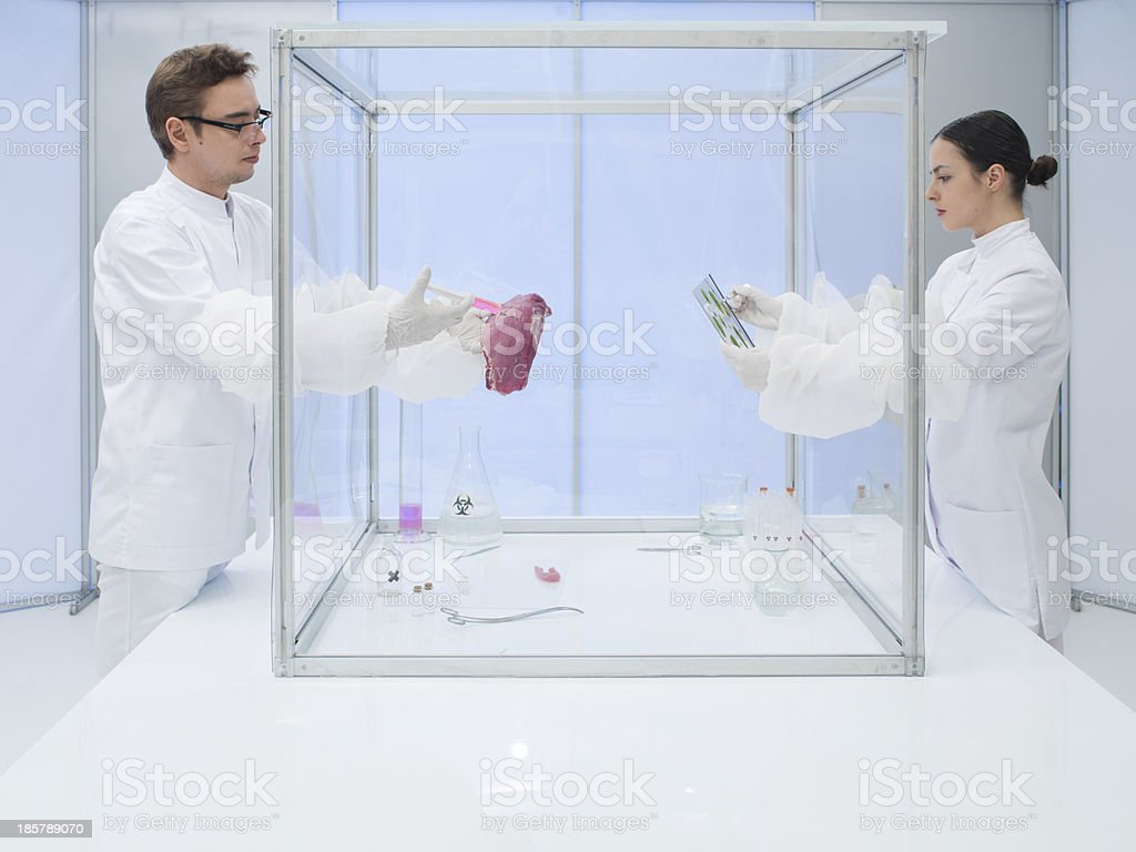 Analyzing biological matter in sterile chamber royalty-free stock photo