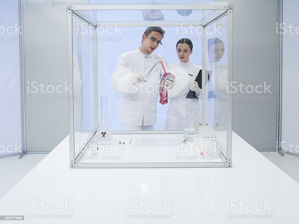 Analyzing raw meat in sterile chamber royalty-free stock photo