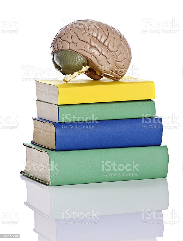 Anatomical model of human brain sits on books royalty-free stock photo
