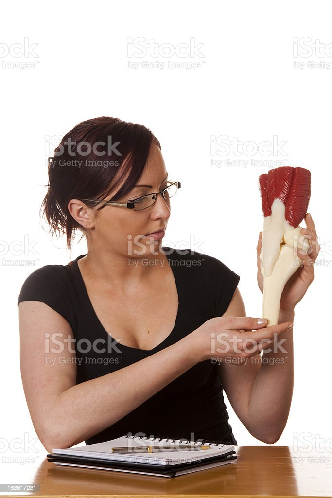 Anatomical model stock photo