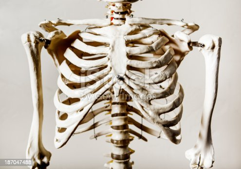 anatomical skeleton rib cage stock photo 187047488 | istock, Skeleton