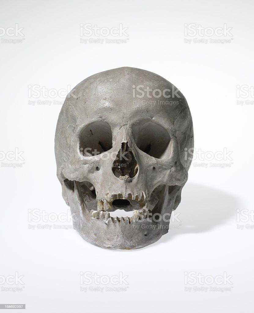 Anatomically correct medical model of the human skull royalty-free stock photo