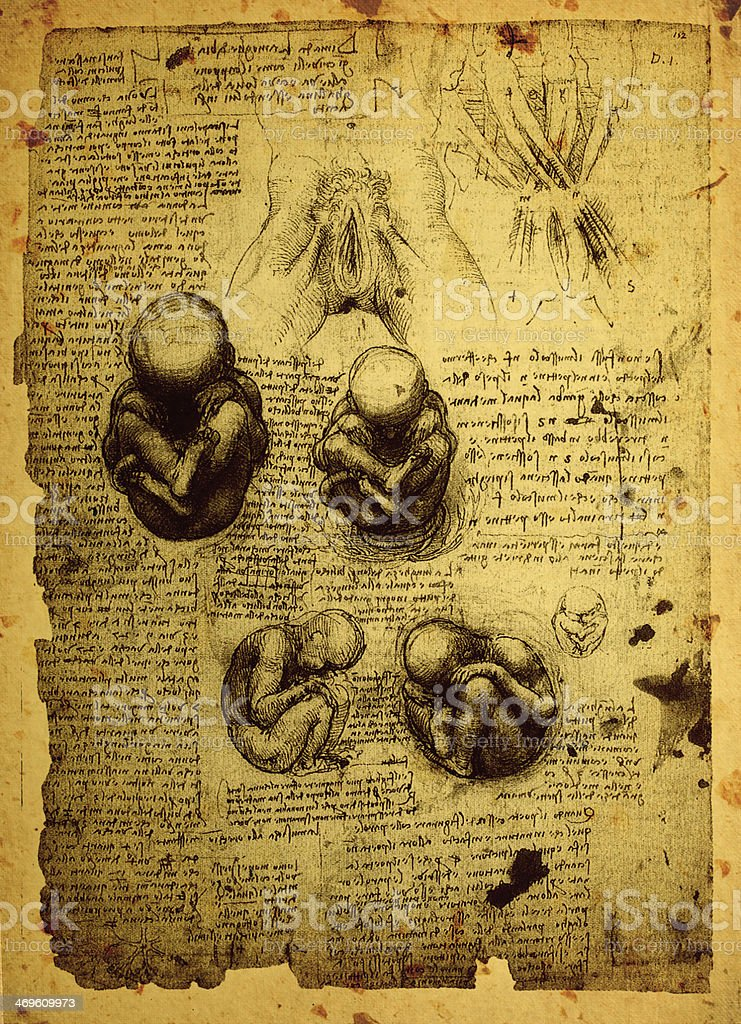 Anatomy art stock photo