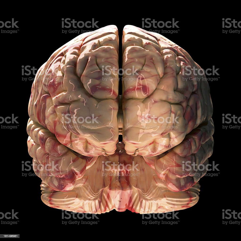 Anatomy Brain - Front View on Black Background royalty-free stock photo
