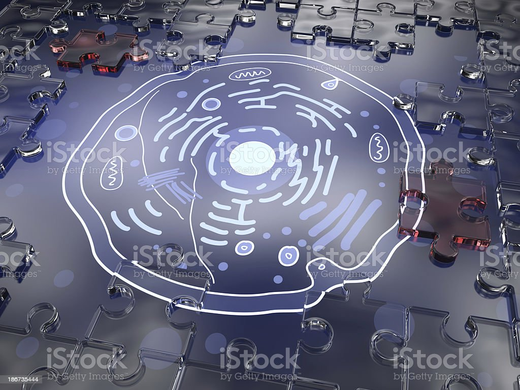 Anatomy Cell stock photo