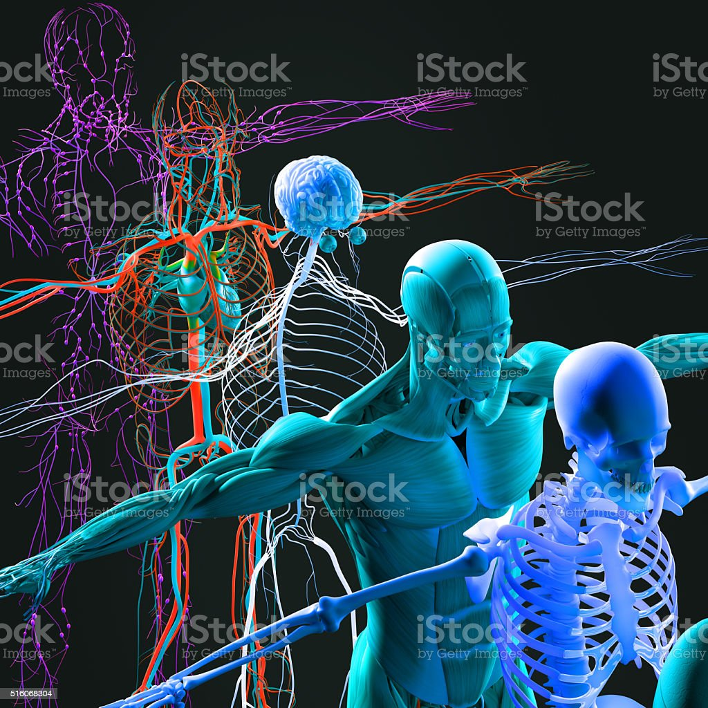 Anatomy exploded view, deconstructed.Creative color palettes and designer detail. stock photo