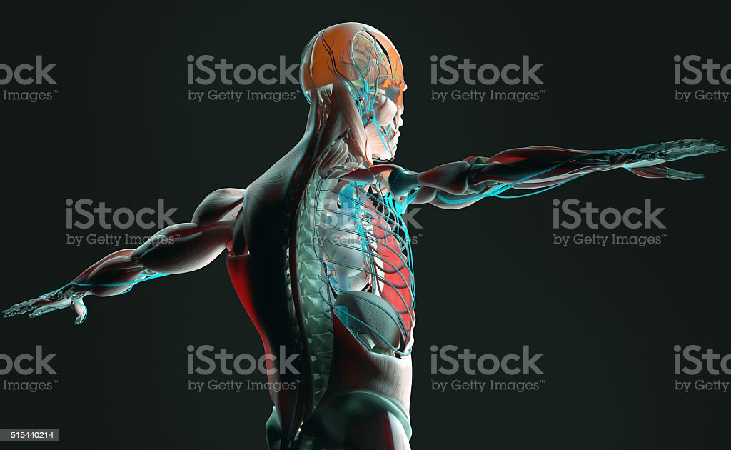 Anatomy futuristic scan with xray-like view of human body.Vibrant colors. stock photo