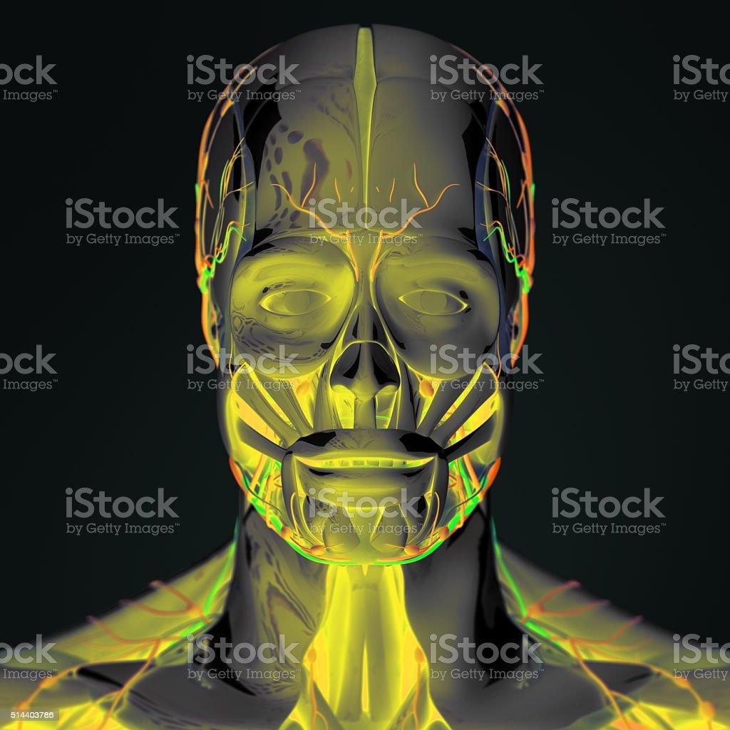 Anatomía De Tecnología Futurista Exploración Cabeza Y Cara Colores ...