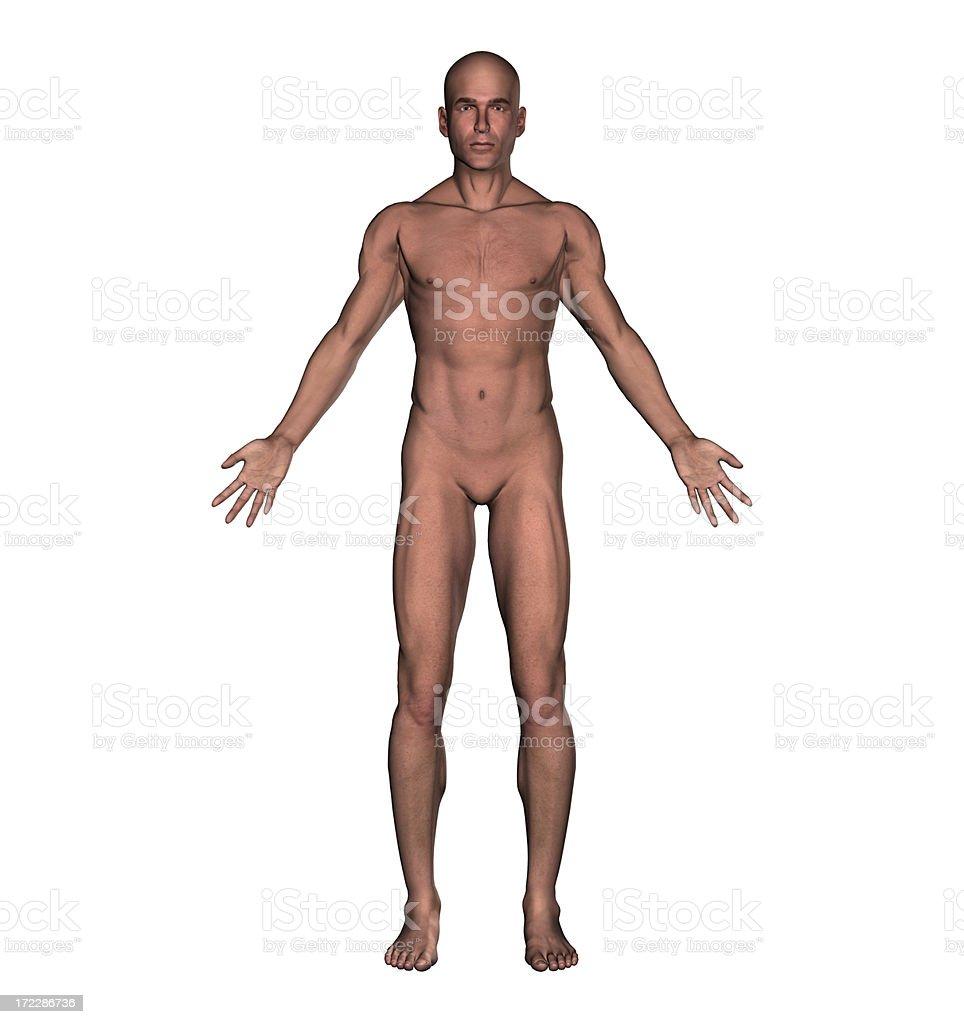 Anatomy: Human body of a man royalty-free stock photo