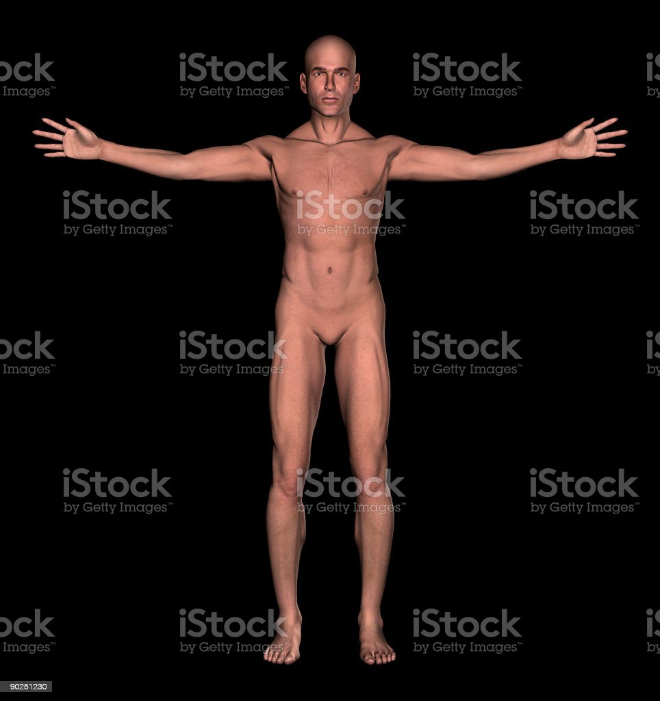 Anatomy: Human body of a man stock photo