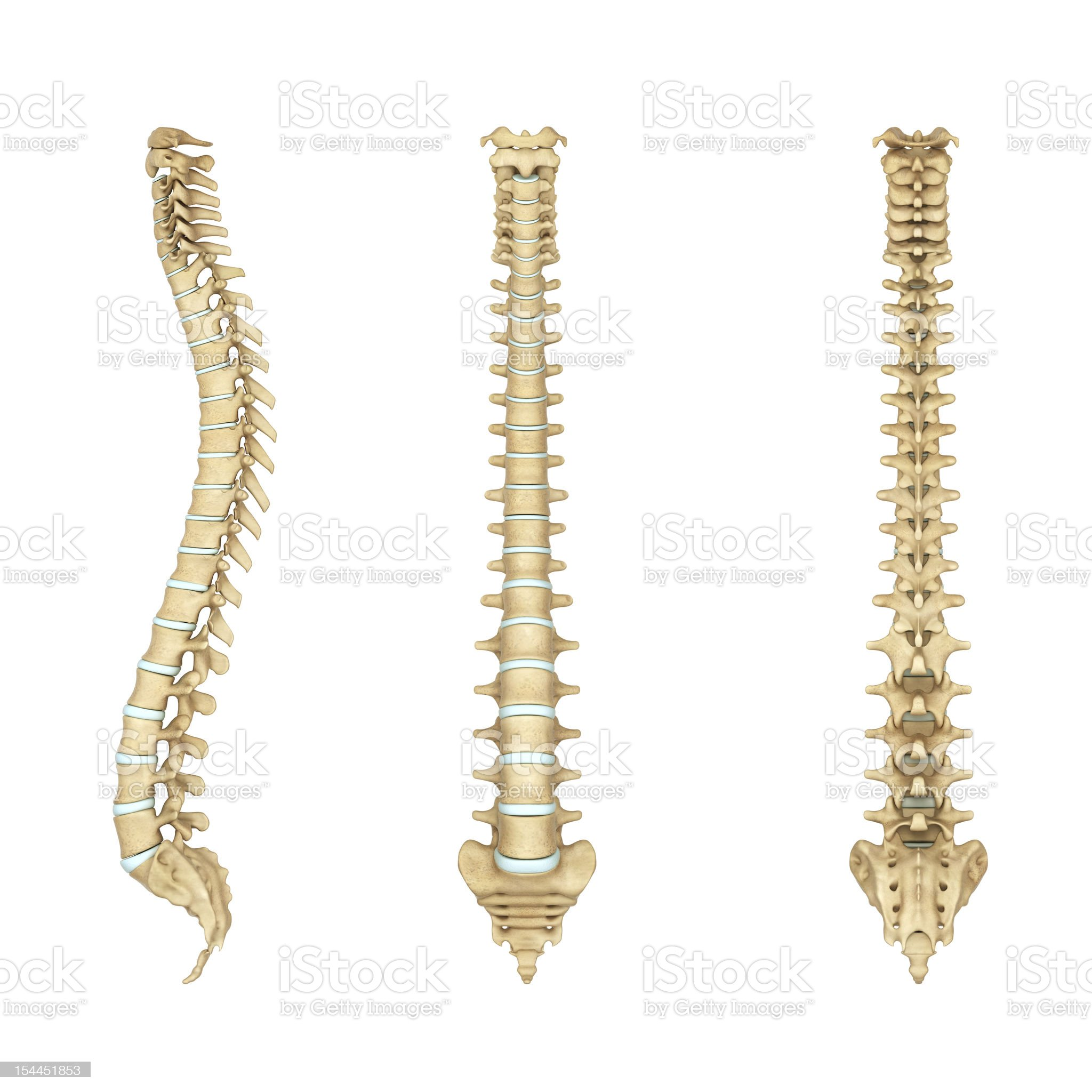 Anatomy illustration of a human spine royalty-free stock photo