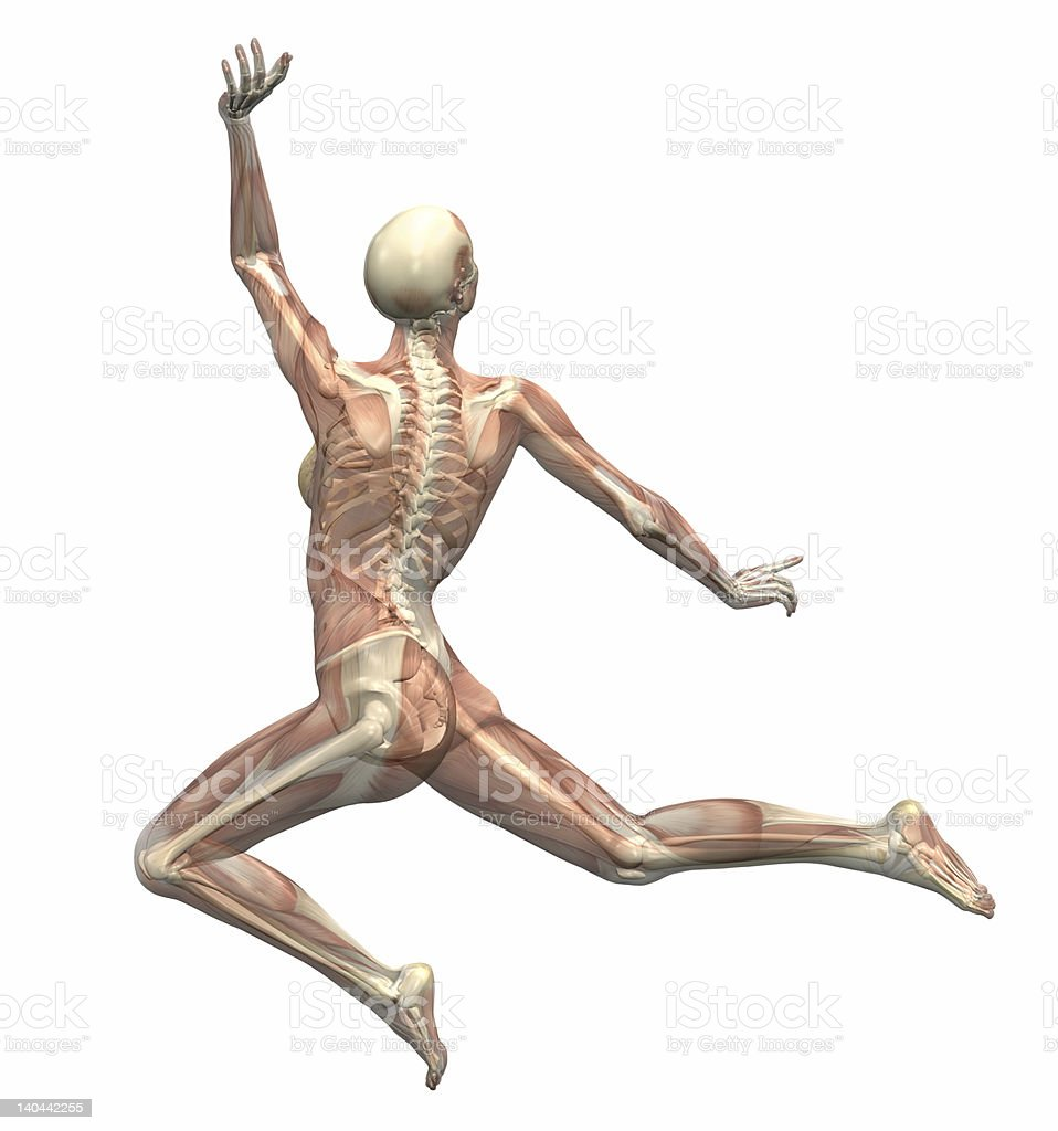 Anatomy in Motion - Woman Leaping 1 royalty-free stock photo