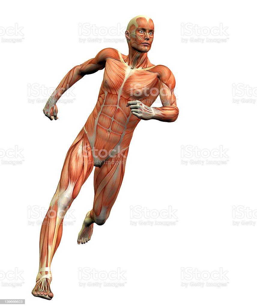 anatomy man 3 royalty-free stock photo