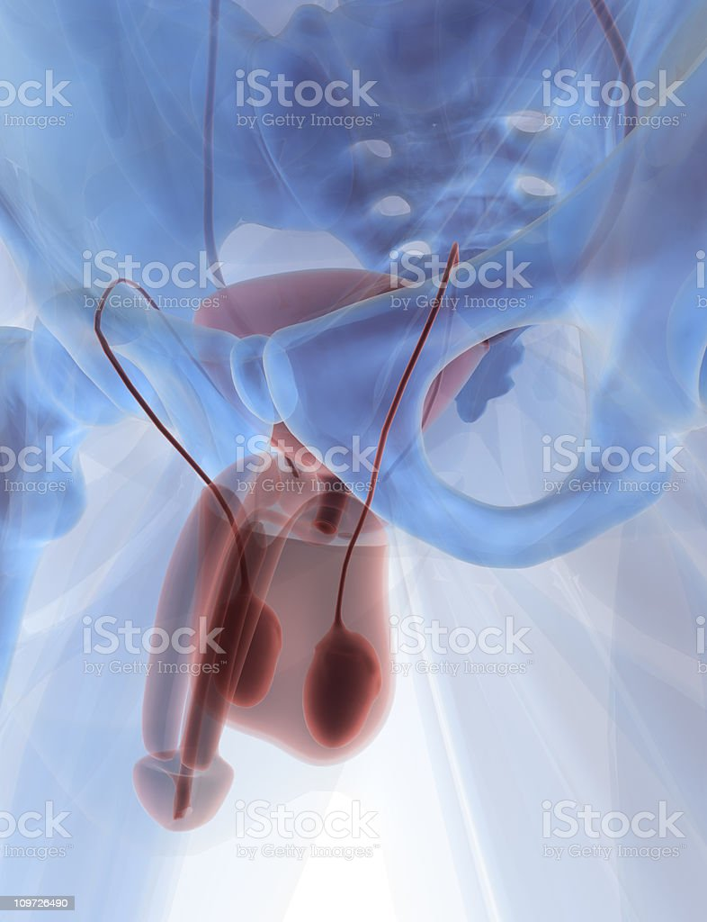 Anatomy - Men in 3D royalty-free stock photo