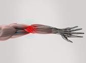 Anatomy model showing elbow pain. On plain studio background.