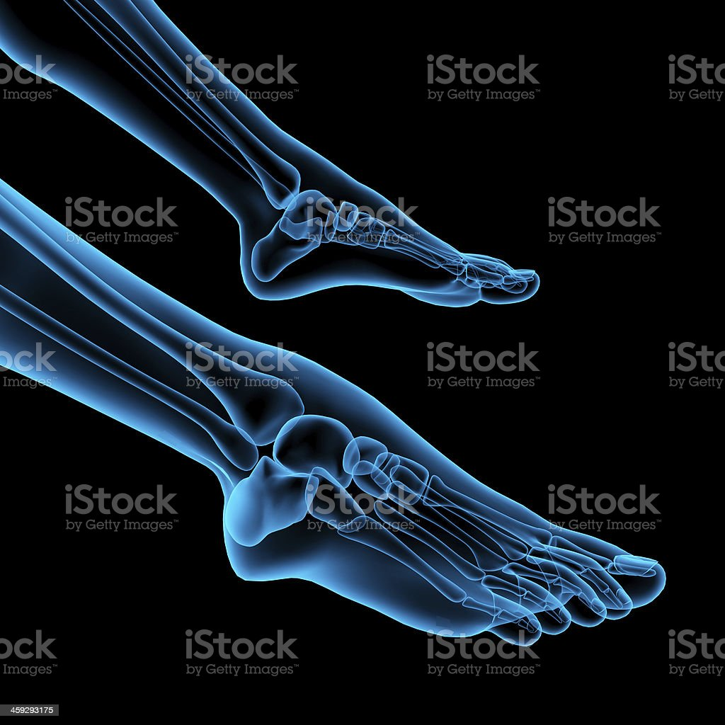 anatomy of a skeleton foot royalty-free stock photo