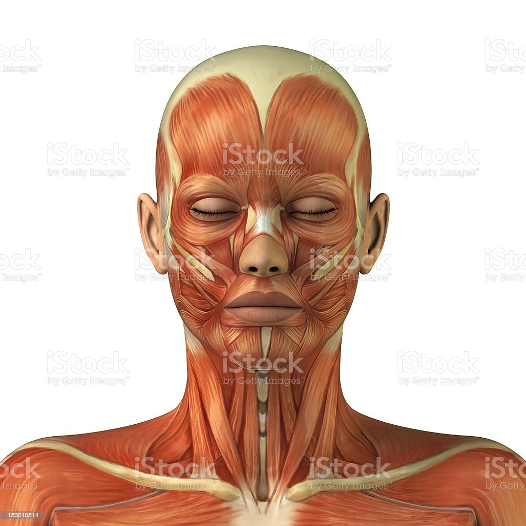 Anatomy of female head muscular system stock photo