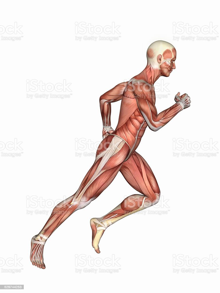 Anatomy of Male in Running Motion stock photo