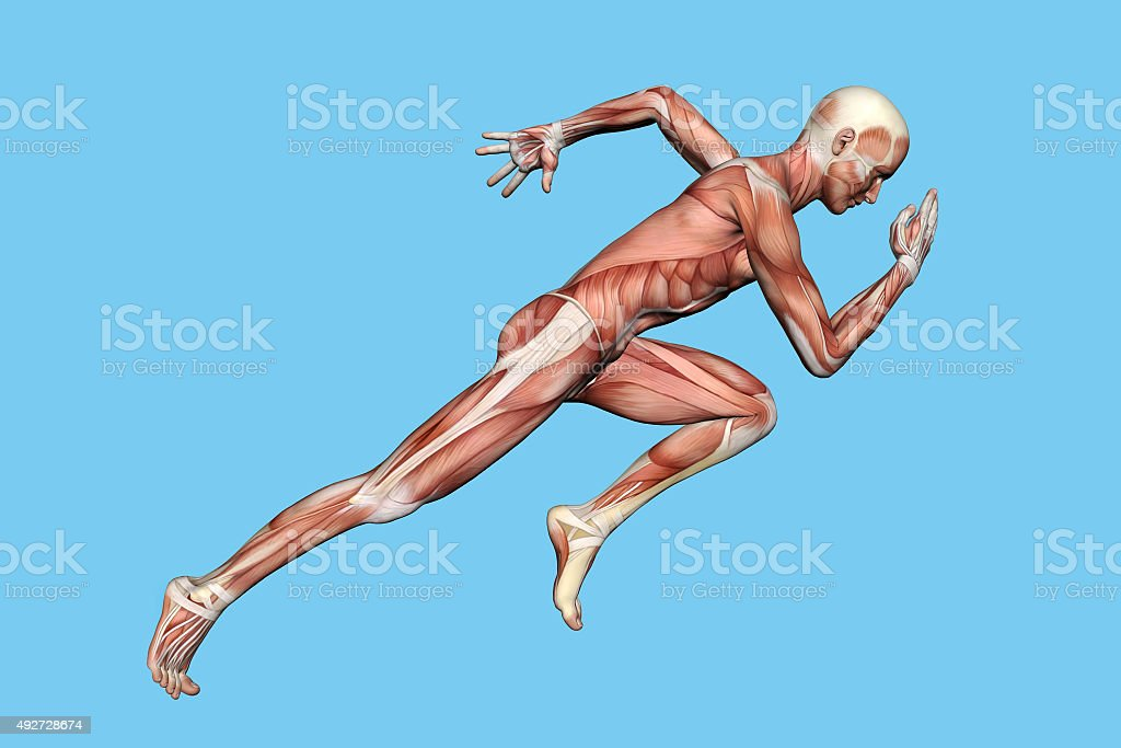 Anatomy of Man in Running Sprint Motion stock photo