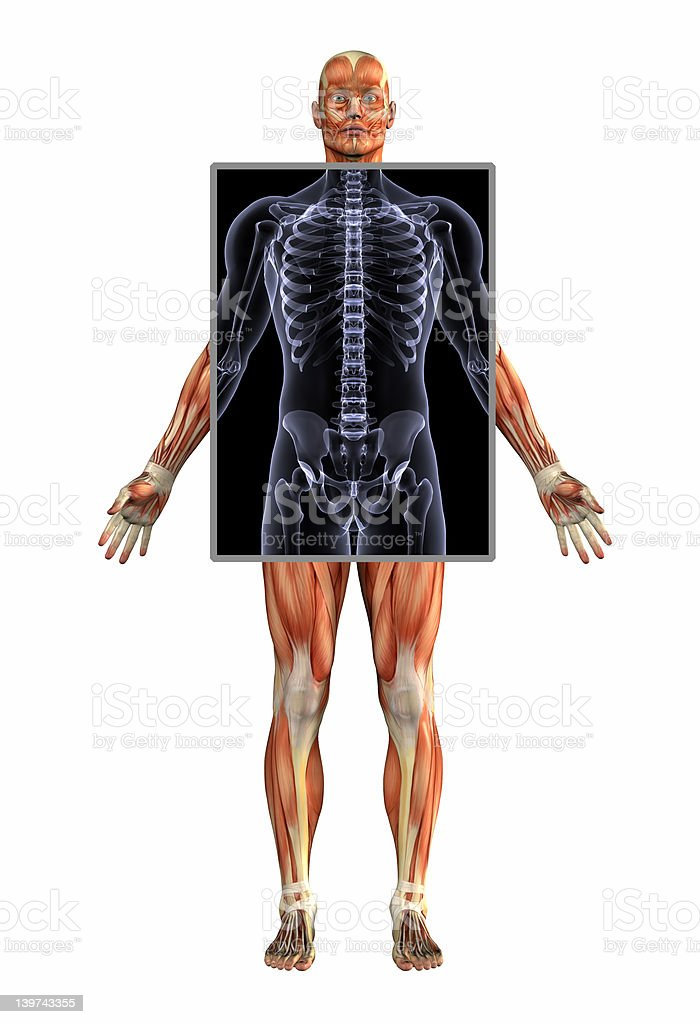 Anatomy of Muscles with Xray royalty-free stock photo