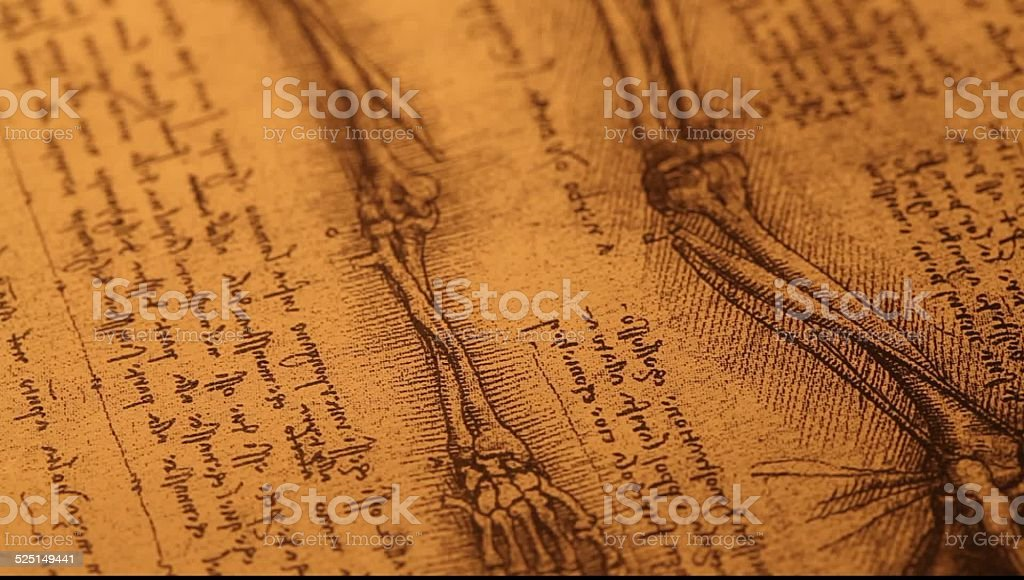 Anatomy stock photo