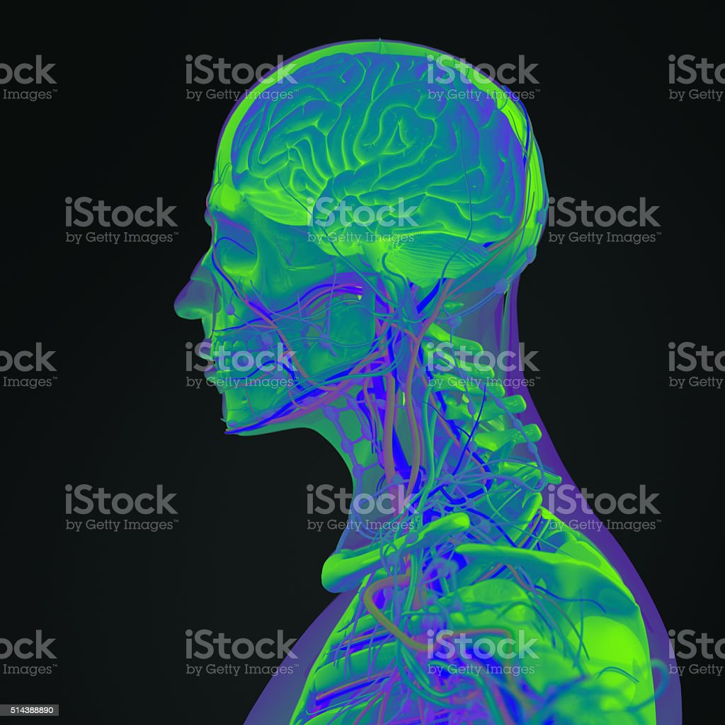 Anatomy technology scan. Head profile and brain side section.Vibrant colors. stock photo