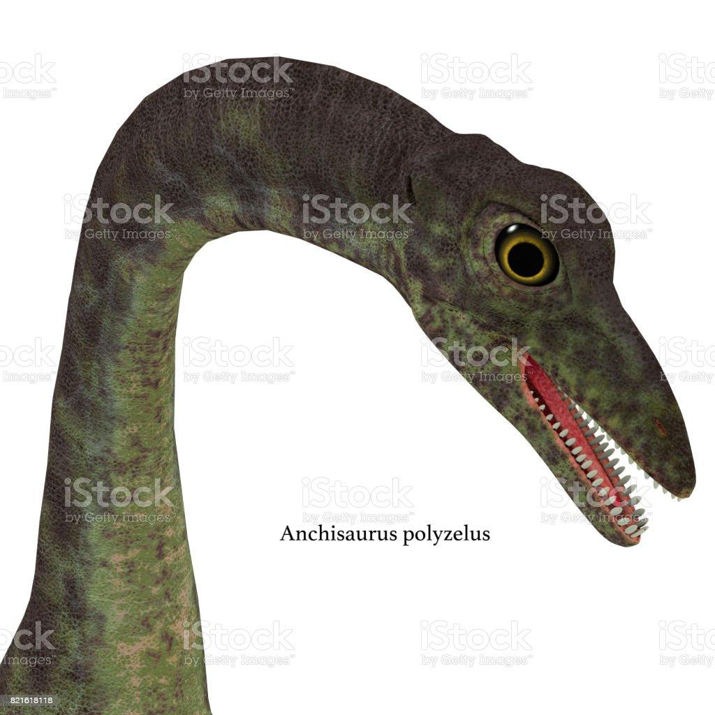 Anchisaurus Dinosaur Head stock photo