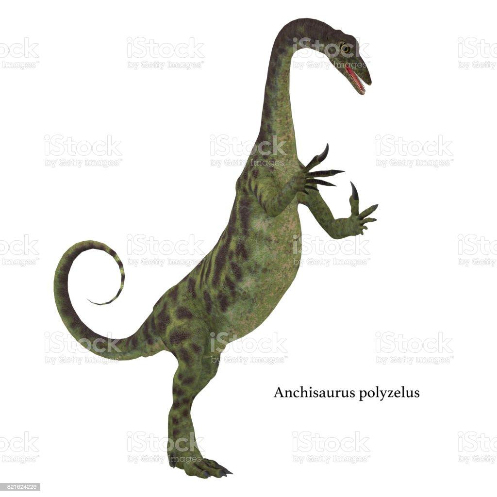 Anchisaurus Dinosaur on White stock photo