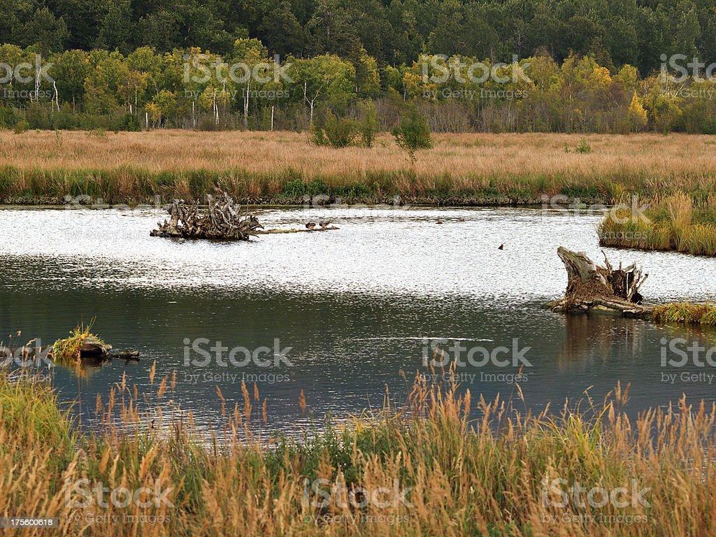 Anchorage Coastal Wildlife Refuge royalty-free stock photo