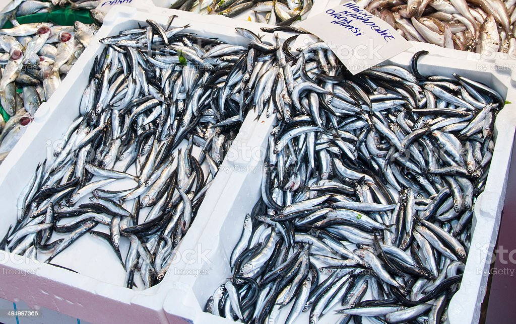 Anchovies at Fish  Market (Hamsi ) stock photo