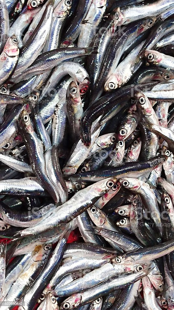 Anchovies Background. stock photo