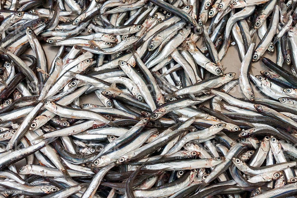 Anchovies (hamsi) stock photo