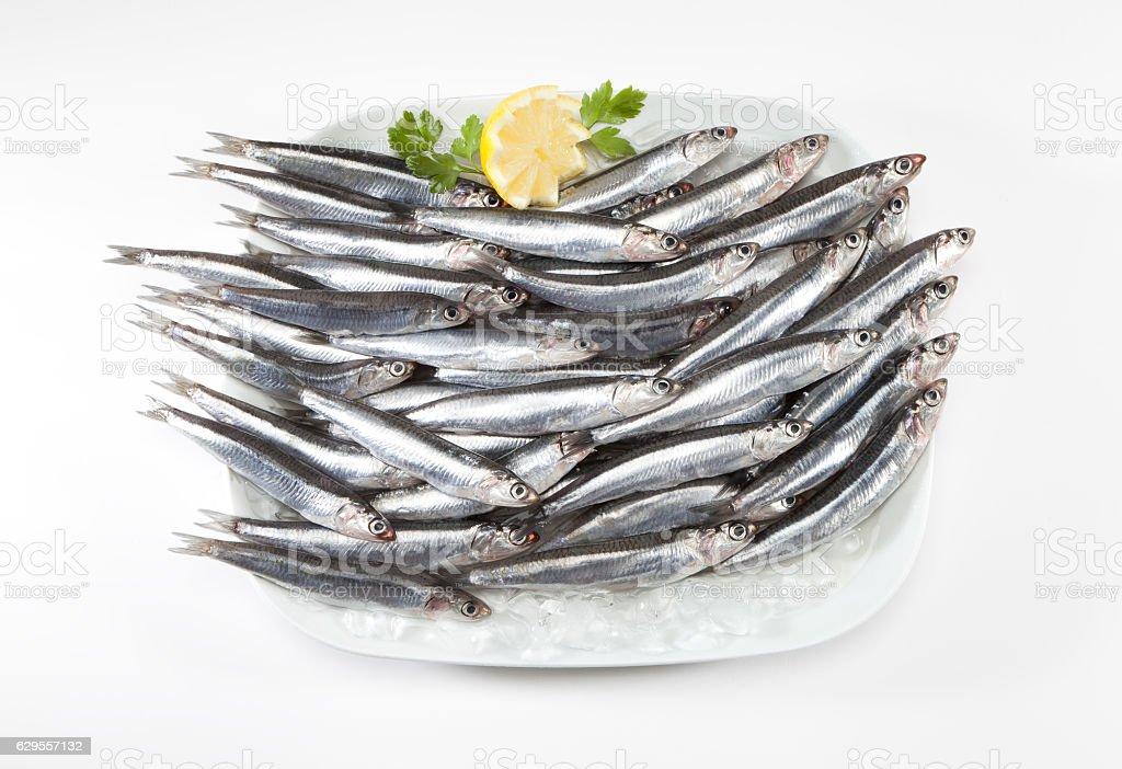 anchovies stock photo