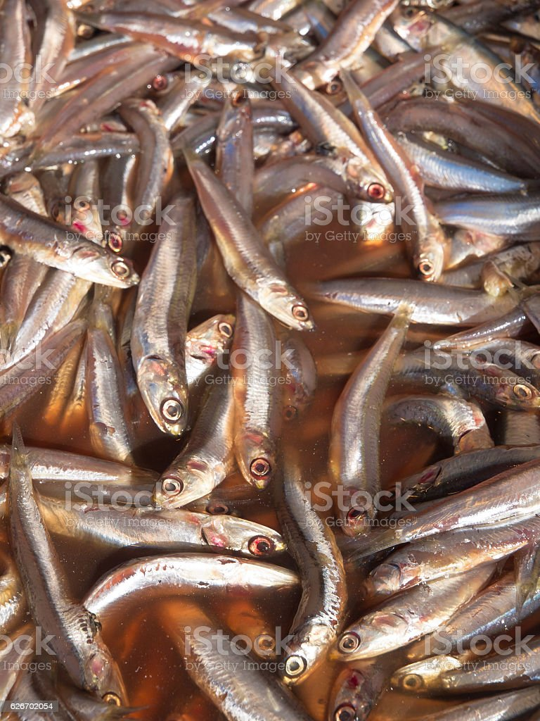 anchovy background stock photo
