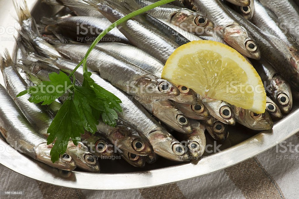 Anchovy royalty-free stock photo