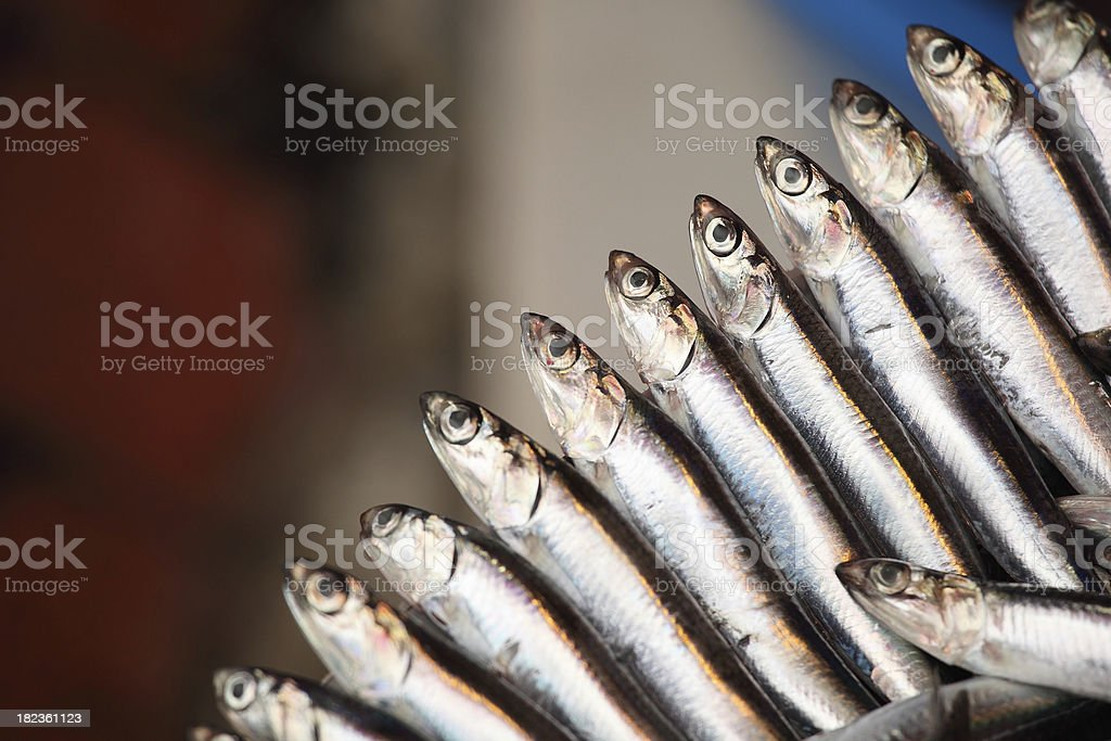 Anchovy stock photo
