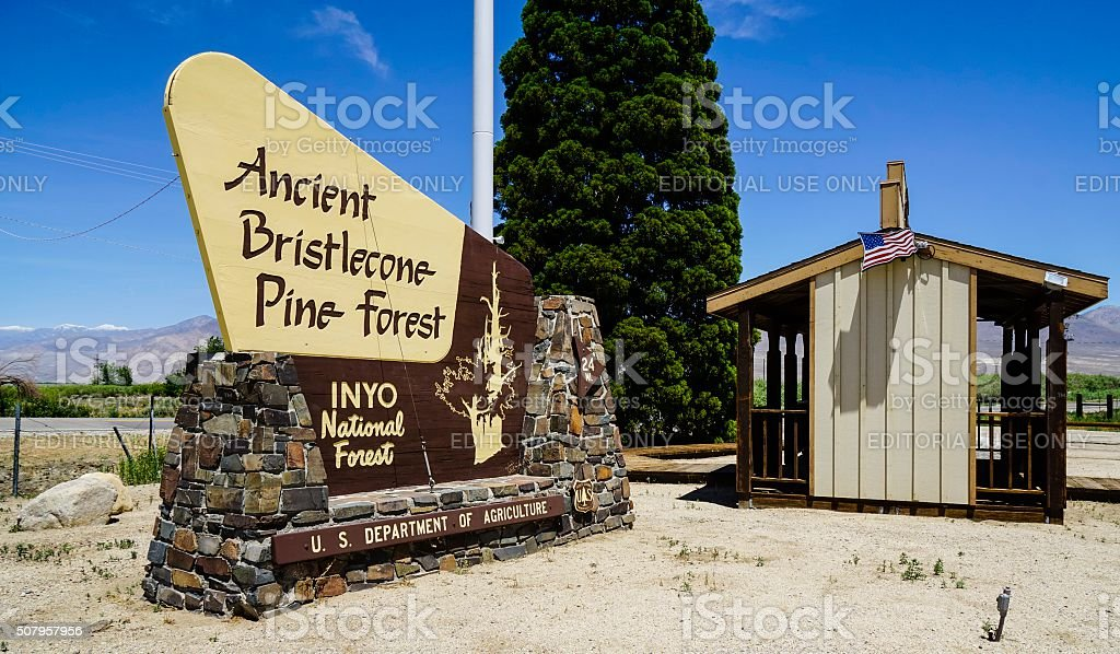 Ancient Bristlecone Forest in INYO National Forest stock photo