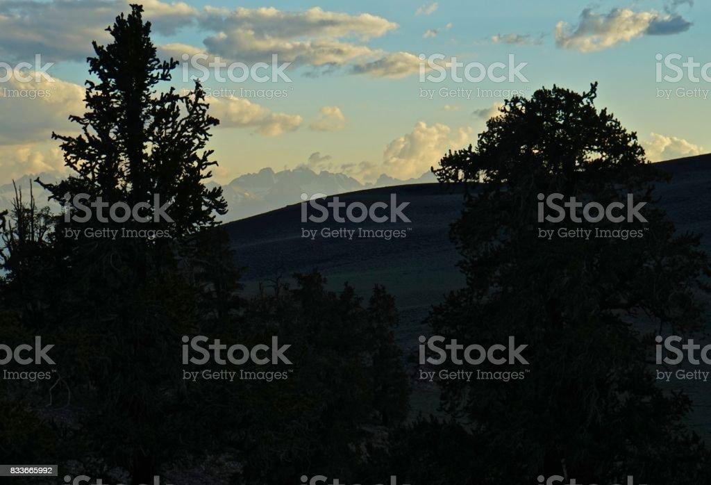 Ancient Bristlecone Pines Sunset stock photo
