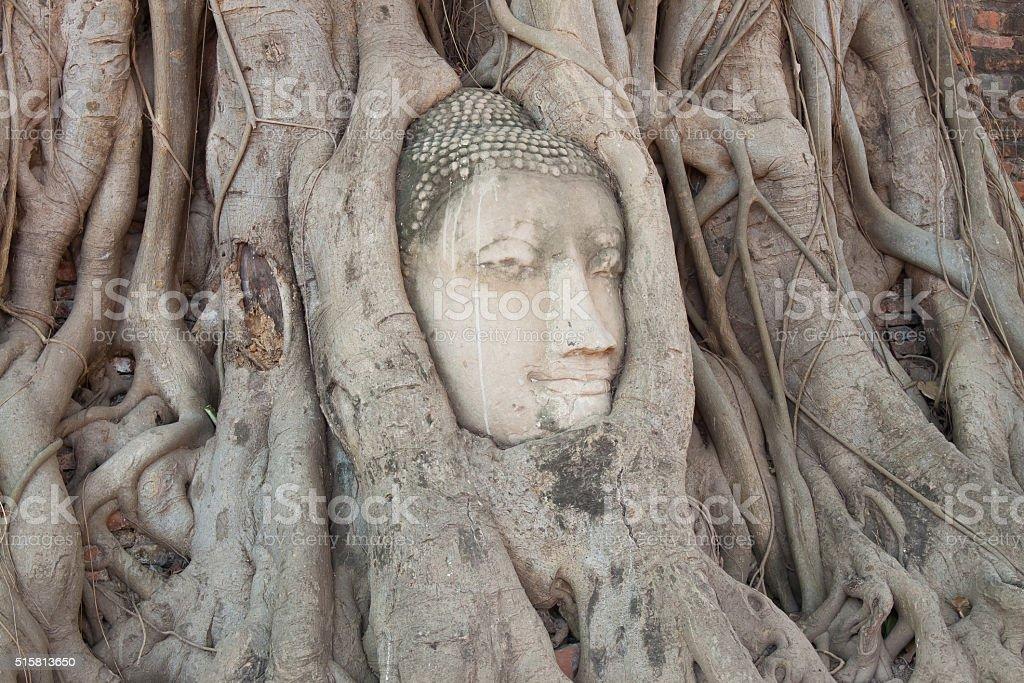 Ancient buddha head inside tree root royalty-free stock photo
