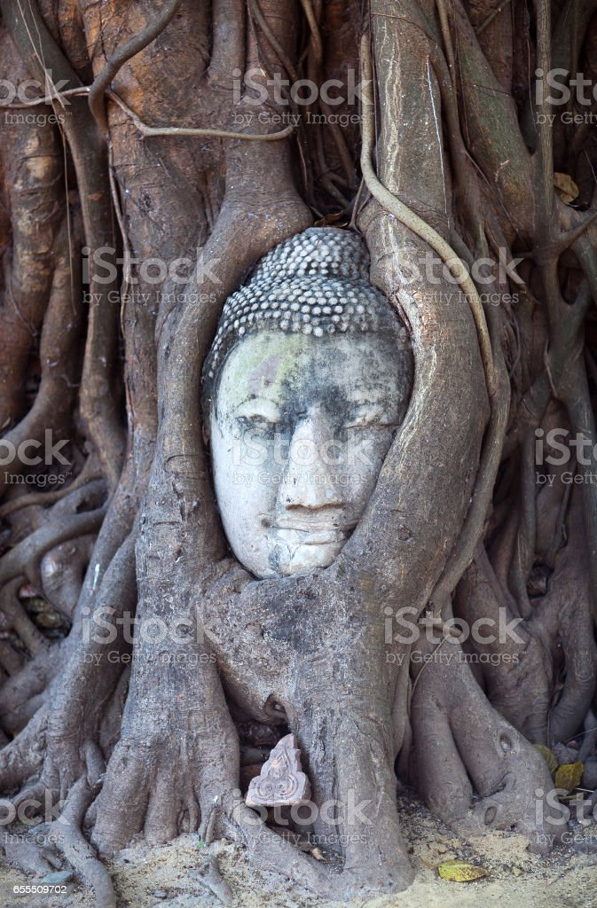 Ancient Buddha's Head in Tree Roots in Ayutthaya, Thailand stock photo