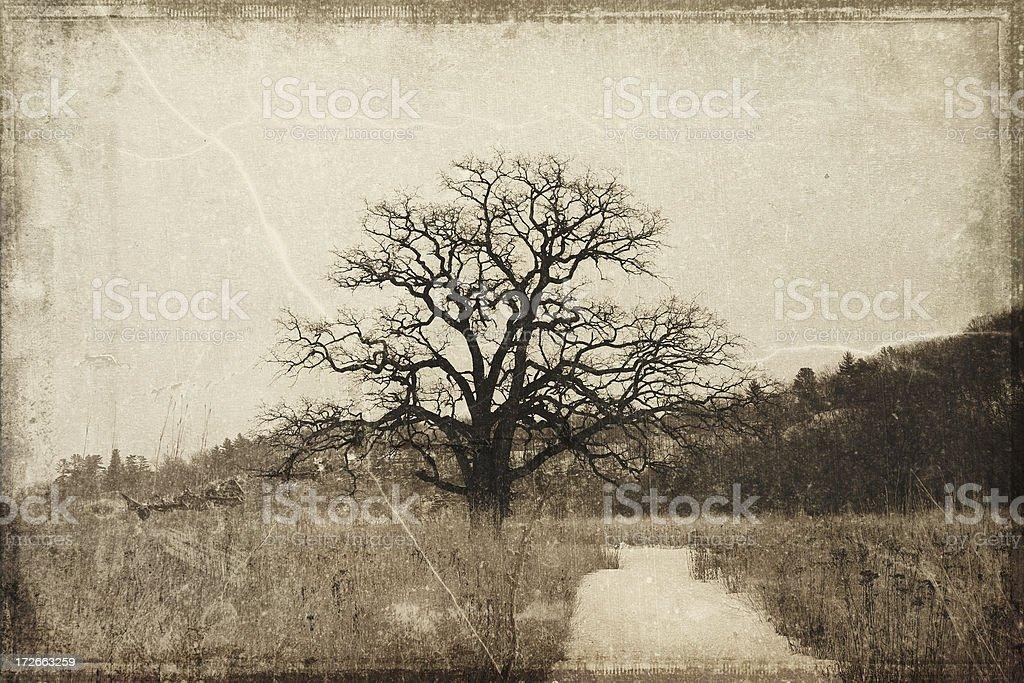 Ancient Burr Oak on the Prairie stock photo